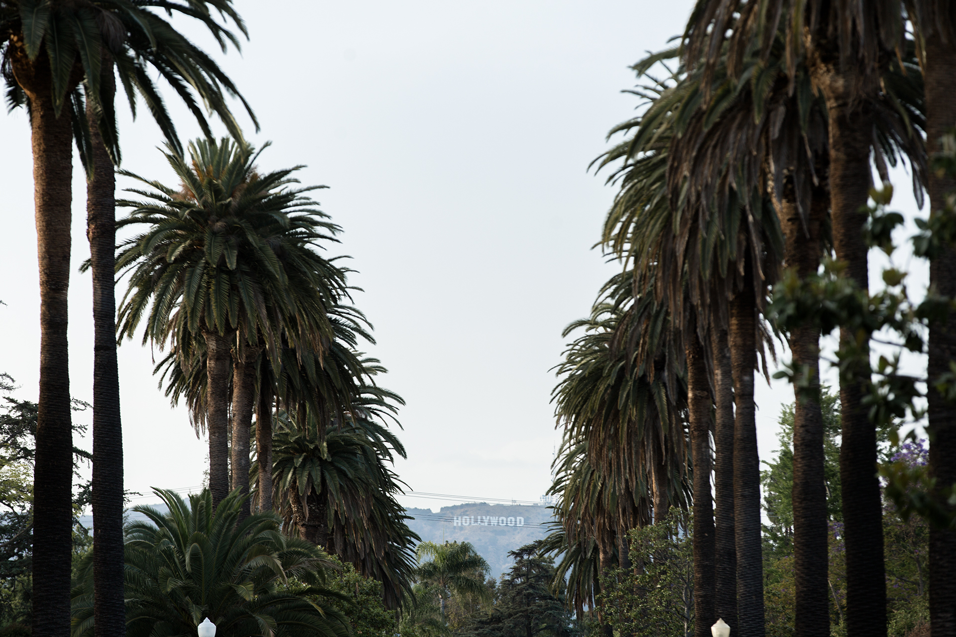 Hollywood Sign through Palm Trees in Los Angeles